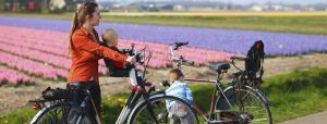 Family with two kids bicycling in dutch countryside. Tulip fields on background